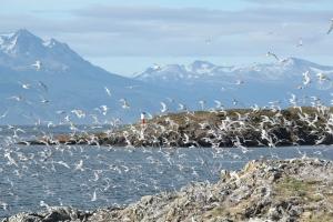 Islands of Birds