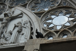 Vulture at Catedral da Se