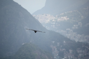 Vultures over Rio