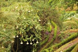 Monte garden