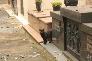 Cat in cemetery in Sao Paulo