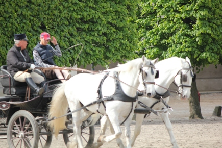 Horses from the Royal Stables