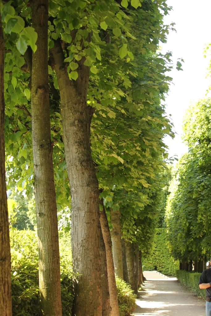 Rodin Garden