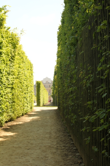 Lines of Hedges