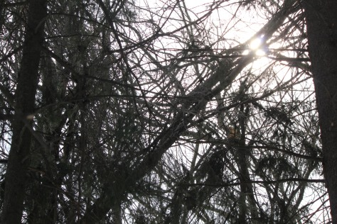 sun peaking through the branches