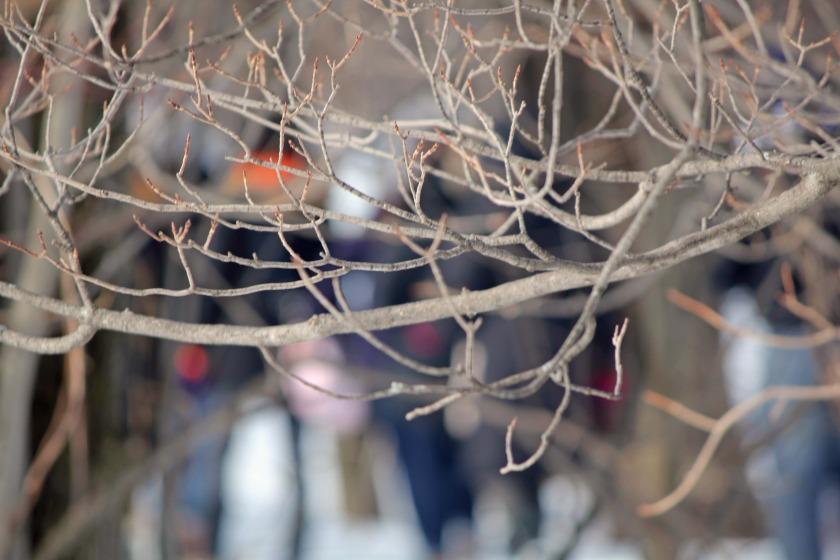 Walking through the trees