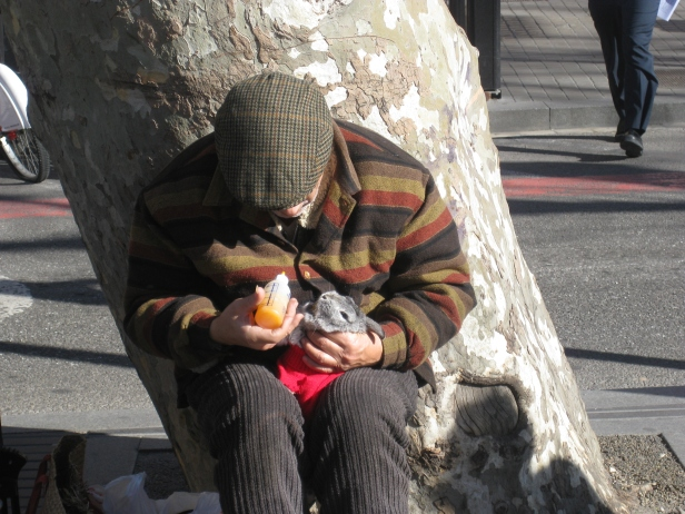 Man with pet rabbit on Las Ramblas