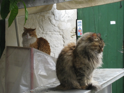 Village cats in Cyprus