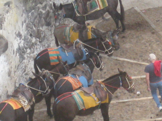and more donkeys
