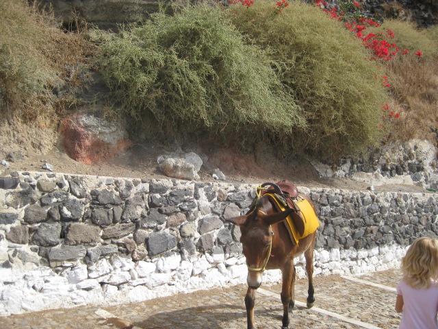 Donkey heading straight for me!