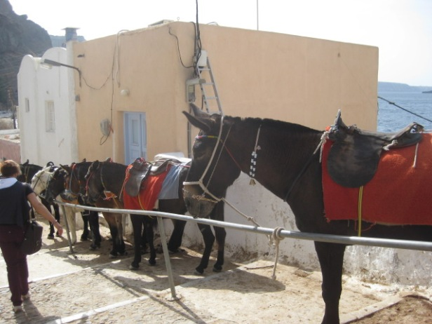 And at the end, donkeys lined up ready to go
