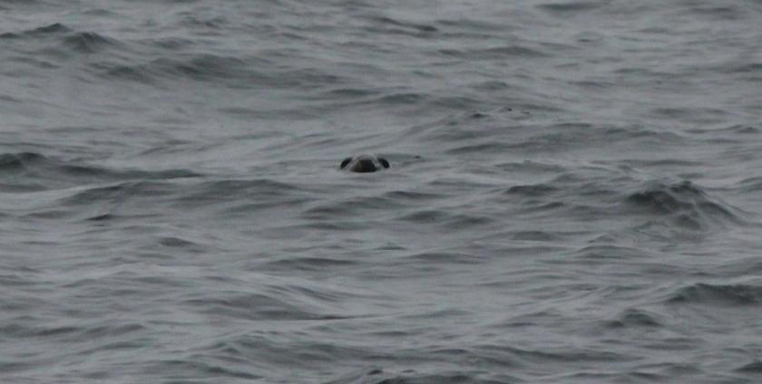 Seal photo-bombing my sea shot!