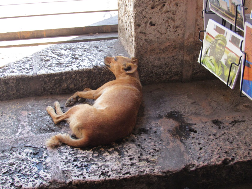 """""""Guard dog"""" at Fortress Morro, Santiago de Cuba"""